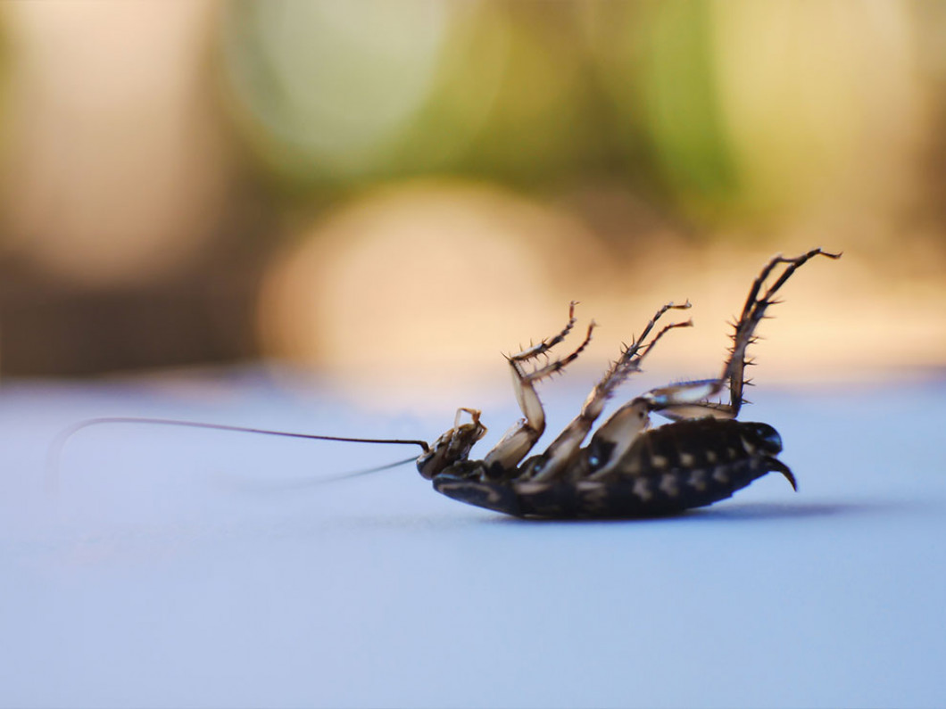 5 reasons why we're the right pest control company for you