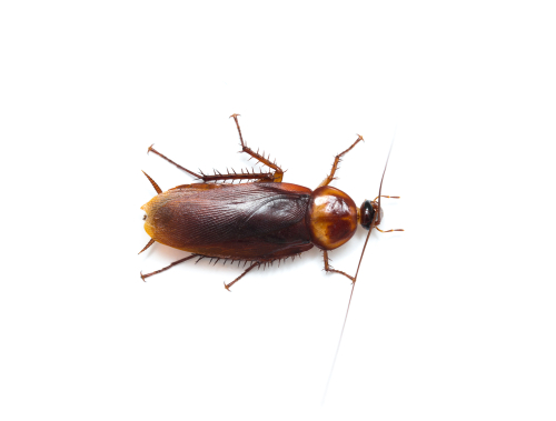 Take advantage of our customer education sessions about maintenance and roach prevention